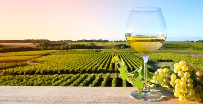 Les vins belges la cuisine de flore cours de cuisine - Cours de cuisine bruxelles ...